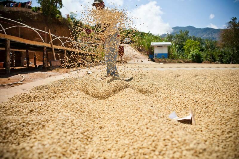 Coffee-processing-Guatemala.jpg